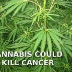 Prostatakrebs Cannabis THC CBD und Krebs